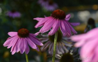 kép: Lila virágok
